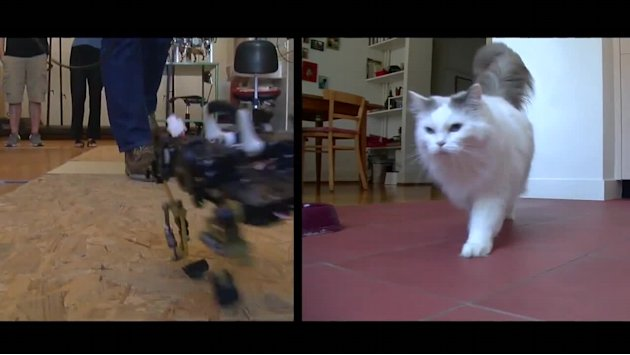 Trending Now: Cat-like robot, Father's Day prank
