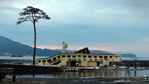 'Miracle Pine Tree' Removed in Tsunami-Ravaged City (ABC News)