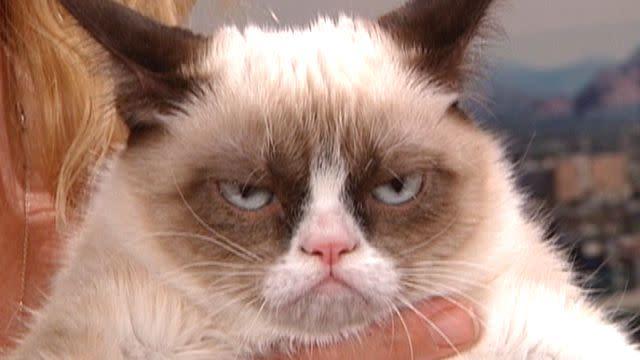 Grumpy cat becomes Internet sensation