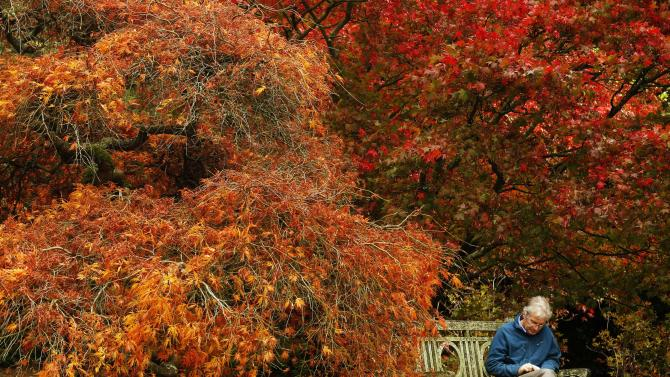 A man reads under trees in autumn colour at Sheffield Park Garden near Haywards Heath in southern England