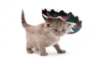These 6 pets are ready to celebrate Cinco de Mayo!