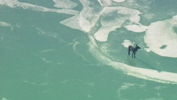 Dog stuck on frozen Lake Michigan rescued