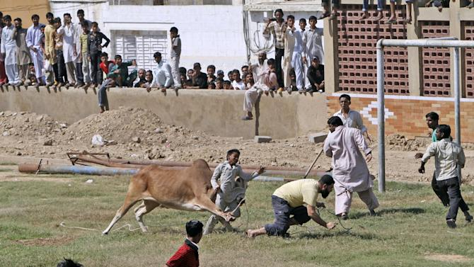 """A bull attacks a boy after running away from Pakistani butchers trying to slaughter it, on the first day of the Muslim holiday of Eid al-Adha, or """"Feast of Sacrifice"""", in Karachi, Pakistan, Saturday, Oct. 27, 2012. The boy was slightly injured according to the photographer. (AP Photo/Shakil Adil)"""