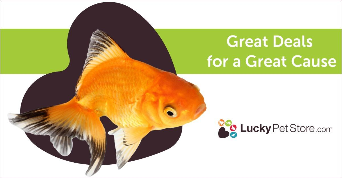 Looking for Great Deals on Fish Products?