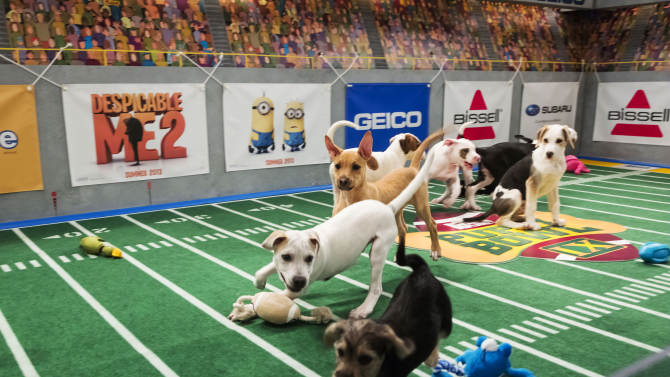 Animal shelters are real winners of 'Puppy Bowl'