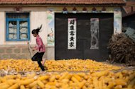 &lt;p&gt;Harvested corn dries on the ground as a girl runs past in a village near Gaomi, in eastern China&#39;s Shandong province on October 13, 2012. China&#39;s economy, which grew on average more than 10 percent in the decade through 2010, has slowed since early last year&lt;/p&gt;