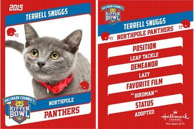 The Kitten Bowl's kittens are named after NFL players