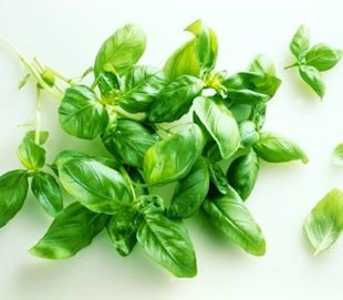 The healing benefits of basil and a nutritious salad recipe