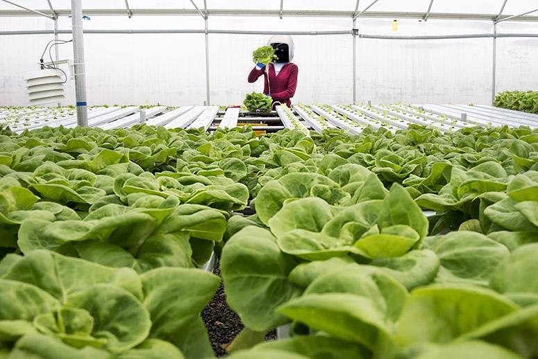 Robot Farmers of the Future Might Grow 10 Million Heads of Lettuce a Year