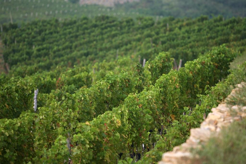China has world's 2nd biggest wine-growing area: trade group