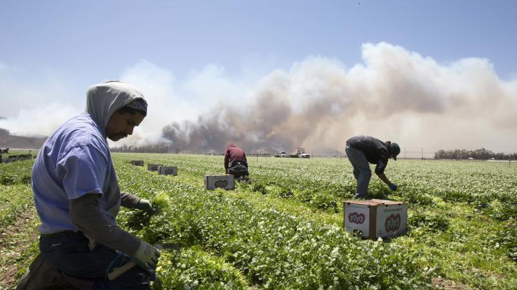 Farmers keep working as a wildfire on a hill burns in the background in Camarillo, Calif., Thursday, May 2, 2013. (AP Photo/Ringo H.W. Chiu)