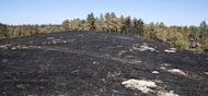 Black soot remains at the site of the West Ash fire at Chadron State Park near Chadron Neb., Sunday, Sept. 2, 2012. Nebraska Gov. Dave Heinaman toured the West Ash fire site and visited with local officials. (AP Photo/Omaha World-Herald, Jeff Beiermann, Pool)