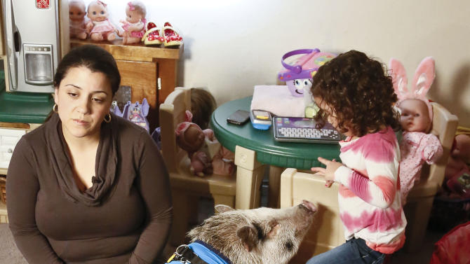 """Danielle Forgione and her daughter Olivia, 3, with Petey, the family's pet pig next to his bed wrapped in a """"Knick"""" blanket, on Thursday, March 21, 2013, in the Queens borough of New York. Forgione is scrambling to sell her second-floor apartment after a neighbor complained about 1-year-old Petey the pig to the co-op board. In November and December she was issued city animal violations and in January was told by both the city and her management office that she needed to get rid of the pig. (AP Photo/Bebeto Matthews)"""