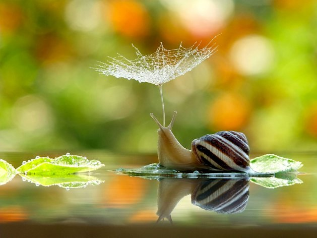 Taking cover: The snail covered by the flower (Caters)