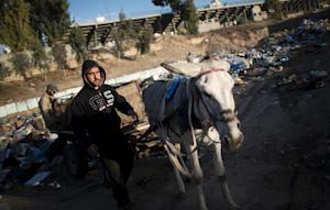 Palestinian workers use a donkey cart to collect rubbish …