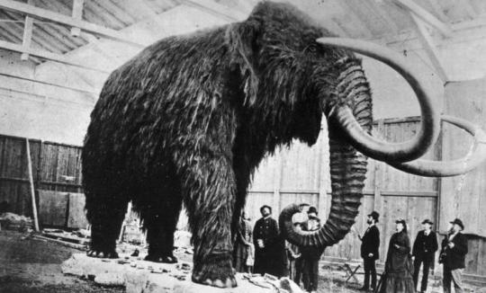 Did Explorers Really Eat A Mammoth In 1951? DNA Study Reveals Surprise