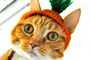 Carrot Top Cat
