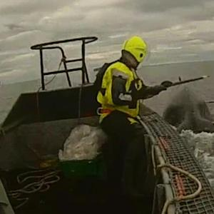 Humpback Whale Rescued by Iceland Coast Guard