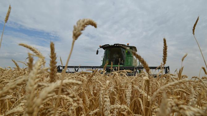 Farmers bring in the harvest with their combine harvesters on a wheat field in the southern Russian Stavropol region on July 9, 2014