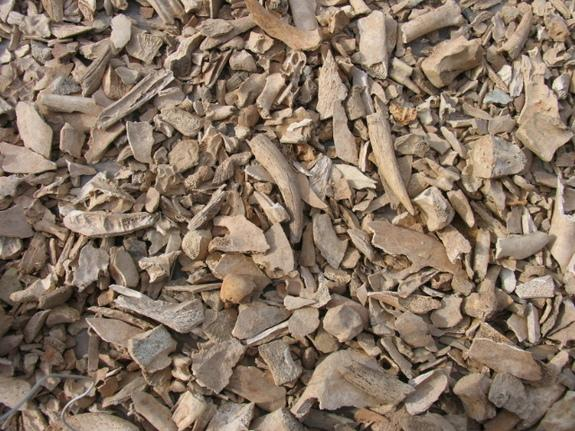 Heap of Cattle Bones May Mark Ancient Feasts