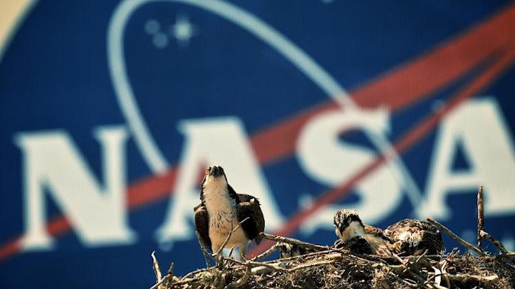 An Osprey eagle with three eaglets sits on a nest in front of the NASA logo on the Vehicle Assembly Building at the John F. Kennedy Space Center in Cape Canaveral on April 28, 2011