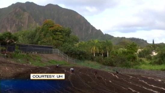 UH program helps new farmers