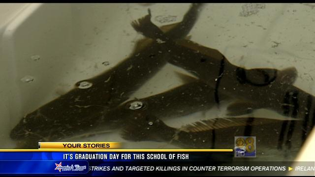 It's graduation day for this school of fish
