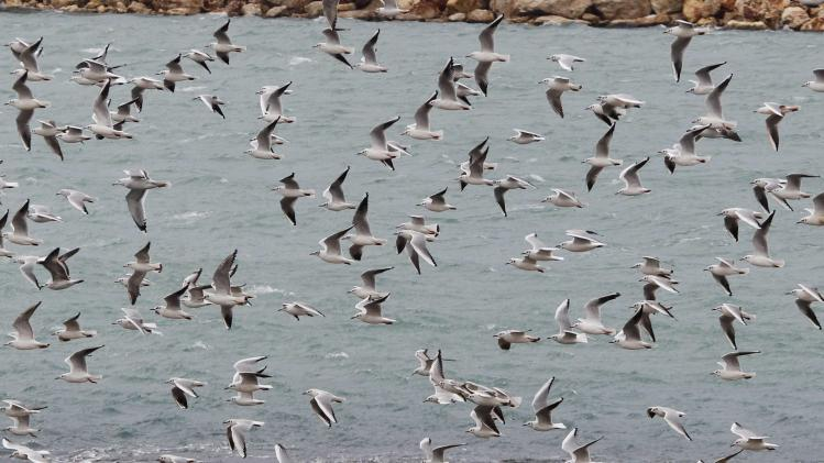 A flock of birds fly near the sea on a winter day in Sidon, southern Lebanon