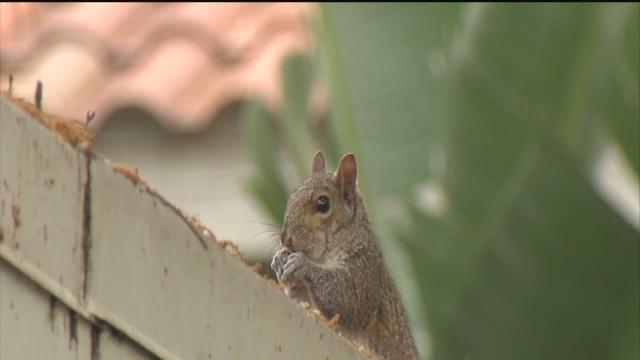 Squirrel power outage fuels change