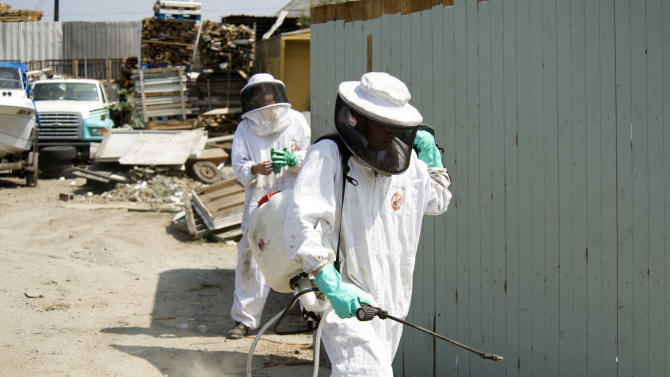 Bee Keeper Technicians Kris Fricke, left and Ryan Moore finish neutralizing a hive of aggressive honey bees in Santa Ana, Calif. on  Thursday, Sept. 15, 2011.  (AP Photo/Orange County Register, Ken Steinhardt)