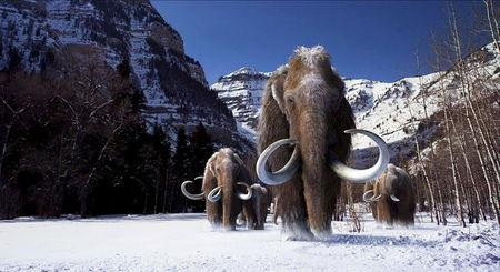 An undated illustration shows a group of woolly mammoths, the huge Ice Age mammals