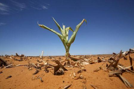 South Africa won't declare national disaster over drought