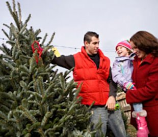 Family buying a Christmas tree