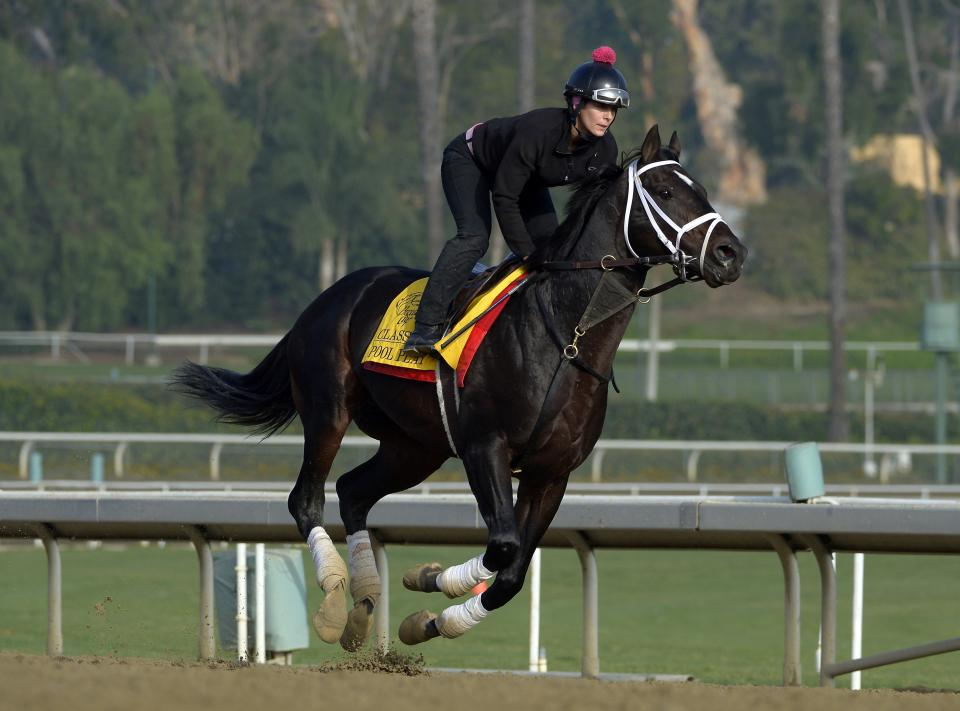 Pool Play is warmed up during a training session for the Breeders' Cup horse races at Santa Anita Park, Thursday, Nov. 1, 2012, in Arcadia, Calif. Pool Play is entered in Saturday's Breeders' Cup Classic race.  (AP Photo/Mark J. Terrill)