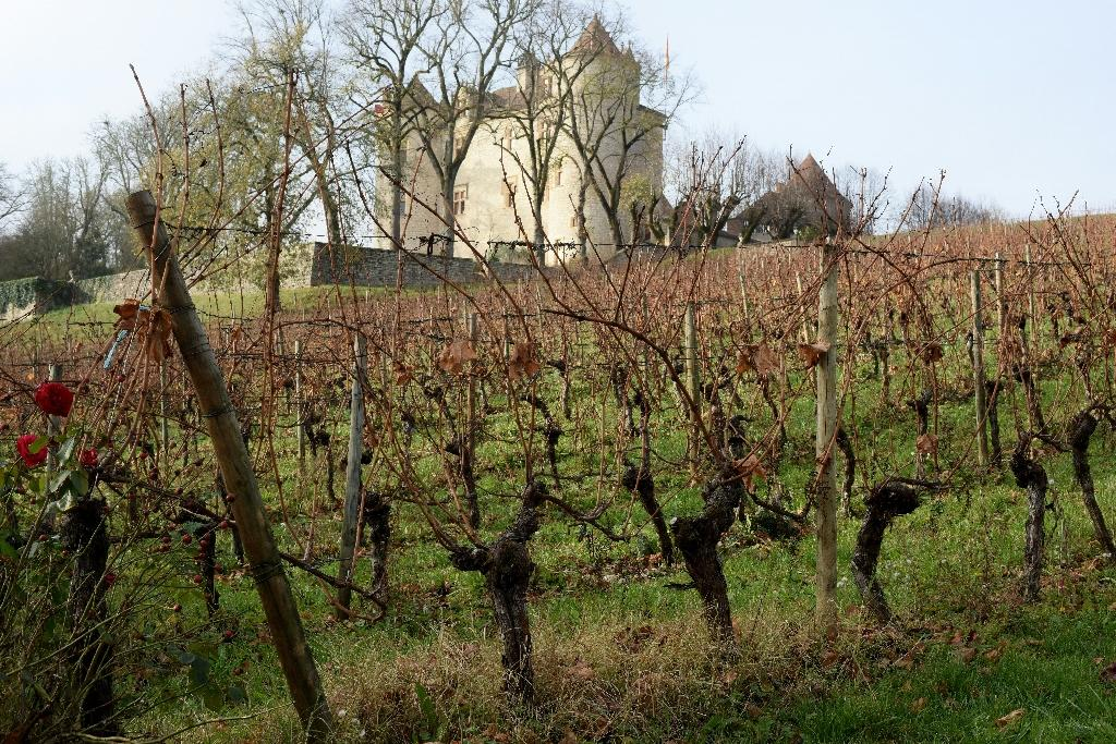 France's Cahors wine is new frontier for Argentina, China