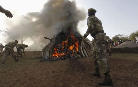 Kenya Wildlife Service rangers burn 15 tonnes of ivory confiscated from smugglers and poachers to mark the World Wildlife Day at the Nairobi National Park