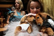 Dachshunds dressed for the occasion, Dee Dee, foreground left, and her cousin Clifford, foreground right, are held by their owner Valerie Diker, as they and other dogs and people wait for the start of the most expensive wedding for pets Thursday July 12, 2012 in New York. The black tie fundraiser, where two dogs were &quot;married&quot;, was held to benefit the Humane Society of New York. Dee Dee and Clifford were part of the wedding party. (AP Photo/Tina Fineberg)