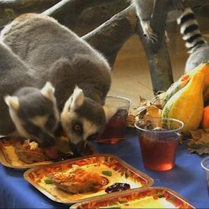 Thanksgiving 2014: Feasting Lemurs and Plenty of Snow