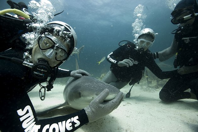 "Shark expert Chang Sein Chin of Stuart Cove's Dive Bahamas and ""Late Late Show"" host Craig Ferguson feed Caribbean reef sharks in Nassau, Bahamas as seen on ""Shark Bites: Adventures in Shark Week."""