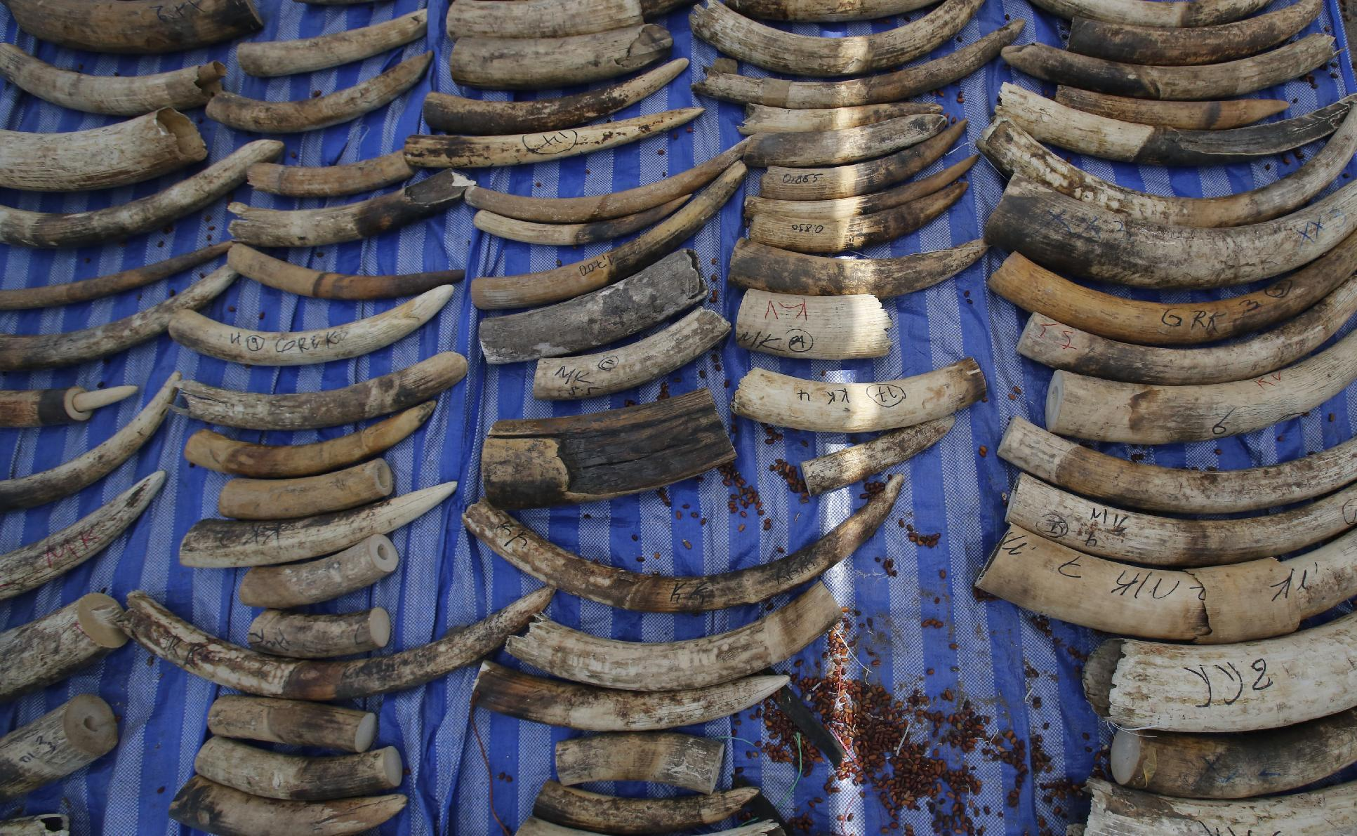 Four tons of elephant tusks seized by customs officials in Thailand