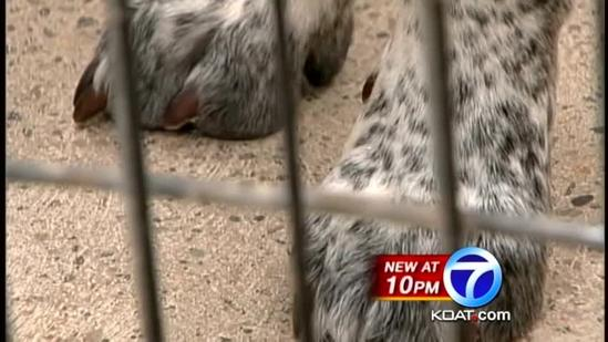 Pet rescue ranch hit by thieves