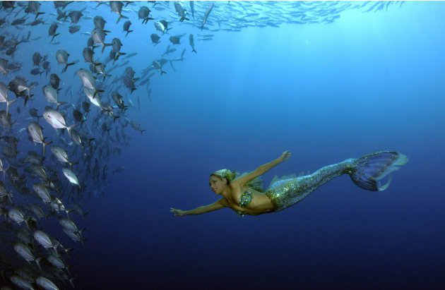 Real Sea Mermaids http://gma.yahoo.com/photos/under-the-sea-with-real-life-mermaid-hannah-fraser-slideshow/