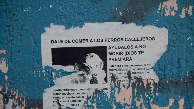 "A poster with an image of a dog reads in Spanish; ""Feed the stray dogs, help them so they do not die. God will reward you!,"" on a wall in the hilltop borough of Iztapalapa in southeast Mexico City, Tuesday, Jan. 8, 2013. The fatal mauling of four people by feral dogs in a Mexico City park set off debate Tuesday about the city's love/hate relationship with its dog population, and the guilt or innocence of 25 dogs trapped near the scene of the nightmarish killings.  Antemio Maya, president of the Street Dog Protection association, estimates for the overall number of dogs in the city of nearly 9 million people range from 1.2 million to 3 million animals. (AP Photo/Eduardo Verdugo)"