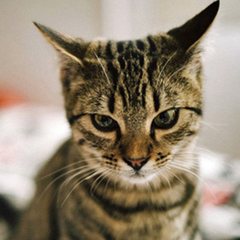 Scientists Discover that Yes, Your Cat is Ignoring You