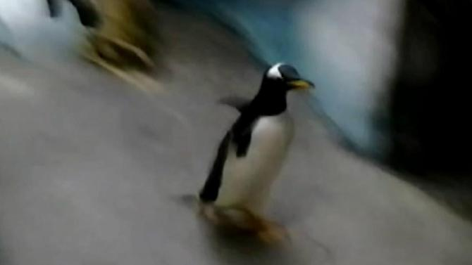 Penguin jumps out of SeaWorld Orlando exhibit