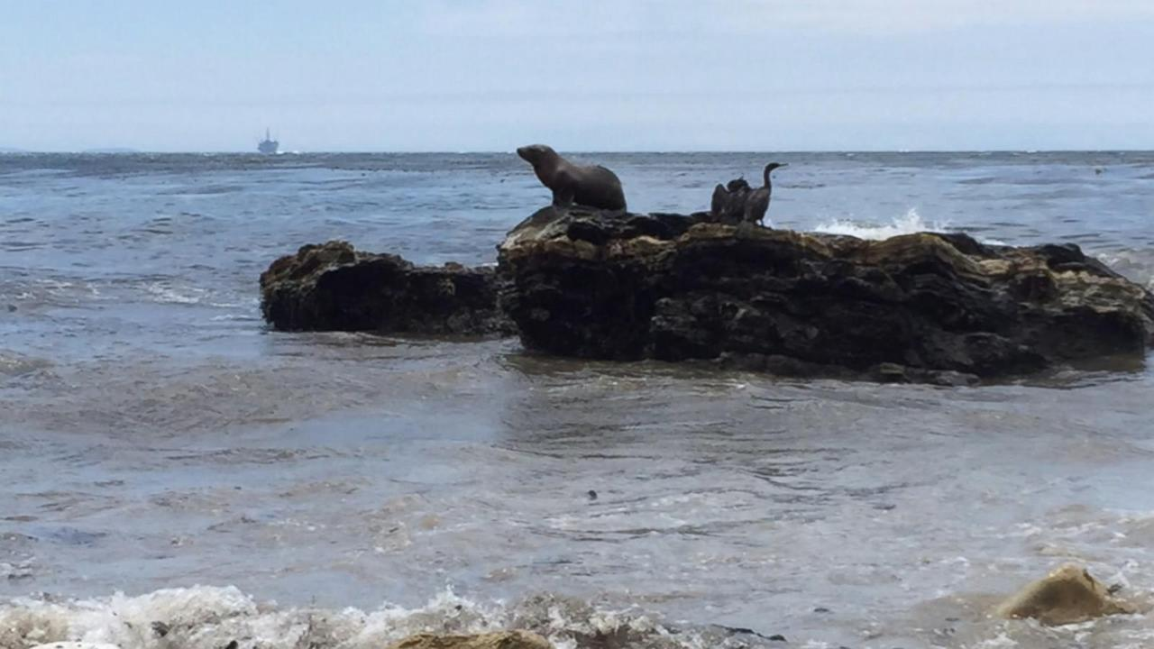 Race Against Time for Wildlife Impacted by Oil Spill