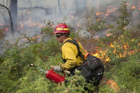 A firefighter works to create a controlled burn with a torch while battling the Carlton Complex Fire near Winthrop