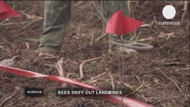 Croatia researchers work on getting honey bees to hunt for landmines