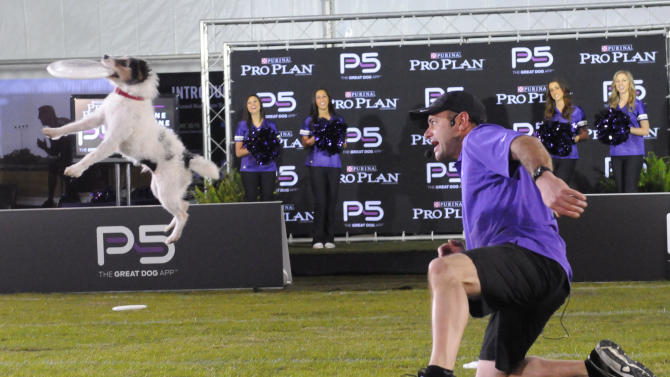 IMAGE DISTRIBUTED FOR PURINA PRO PLAN -  Performance Team trainer John Casey, who helped develop the new Pro Plan P5 app, and his Jack Russell terrier put on a high-flying show during The Purina Pro Plan Canine Combine, on Wednesday, Jan. 30, 2013 in New Orleans, LA.  (Photo by Cheryl Gerber/Invision for Purina Pro Plan/AP Images)