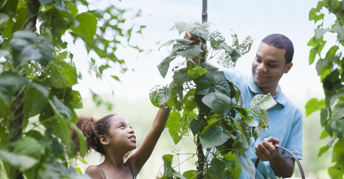 Does Vegetable Gardening Have a Financial Benefit?